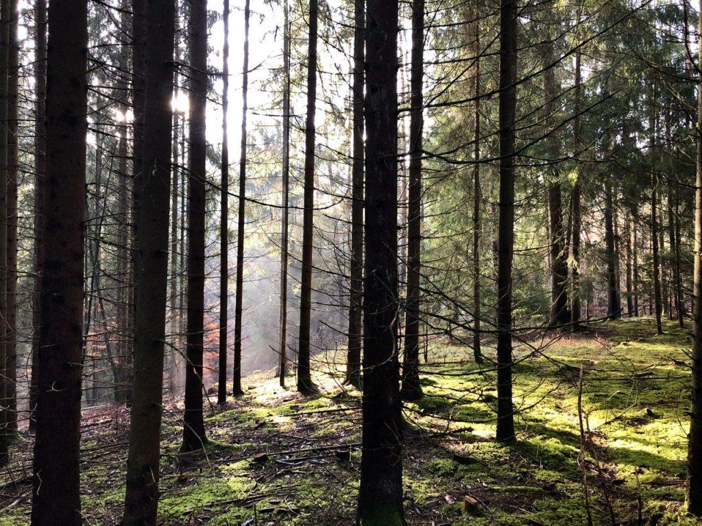 Wald richtig bewirtschaften
