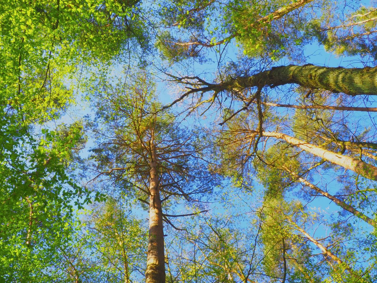 Baumkronen: Arbeitsort der Baumkletterer und Baumpfleger
