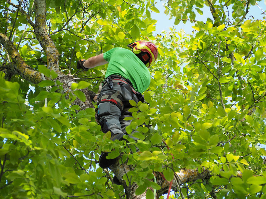 Baumpflege vom Baumkletterer