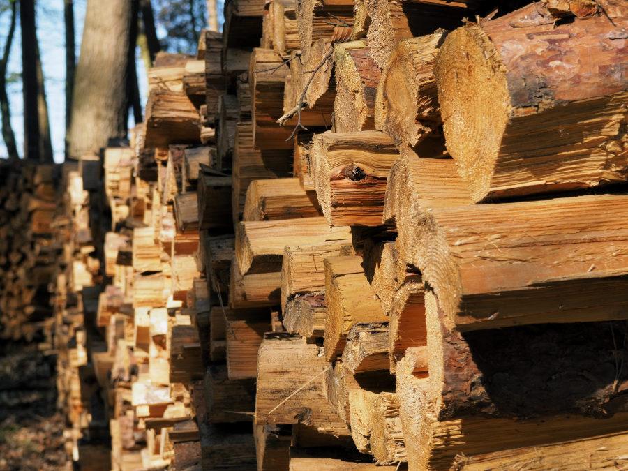 Holzstoß forstliche Beratung